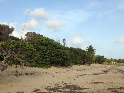 Antenna Beach